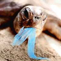 Make Plastic Fantastic - not tragic!