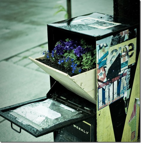 newspaper-box-guerrilla-gardening