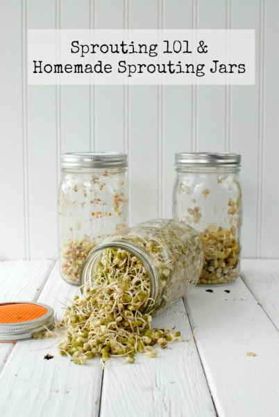 Sprout Jar DIY