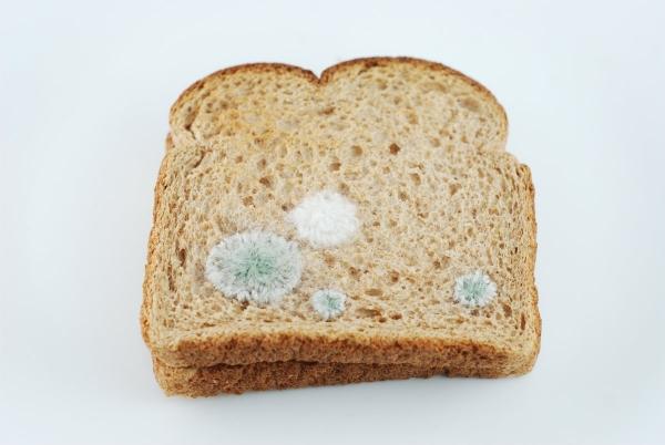 toast-3-600x402