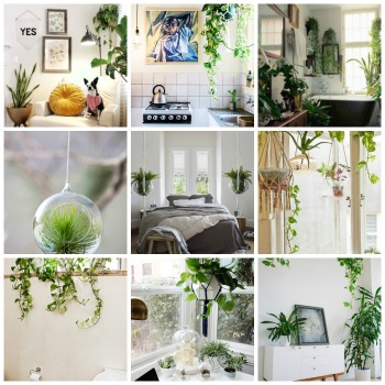 collage-blog-hanging-plants