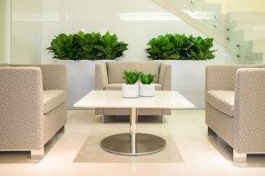 Lobby-seating-plants-compacta-and-aglaonema