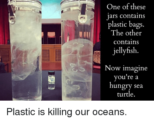 one-of-these-jars-contains-plastic-bags-the-other-contains-5566505